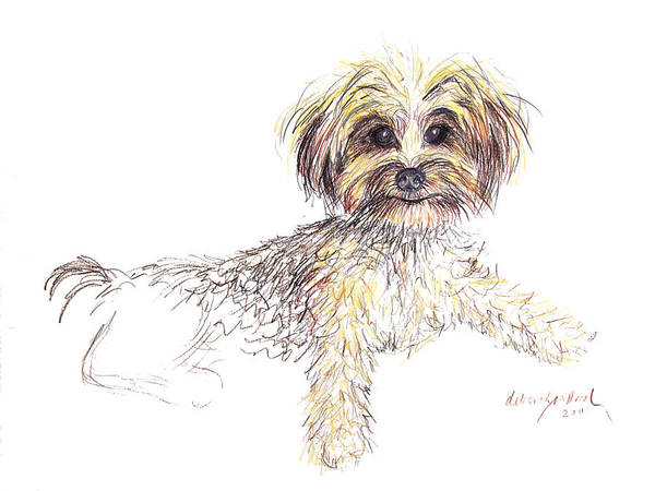 Furry Drawing - Canine Cutie by Deborah Willard