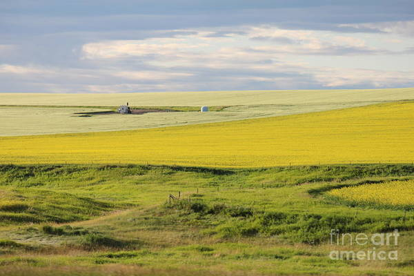 Photograph - Canola Fields And Sky by Donna L Munro