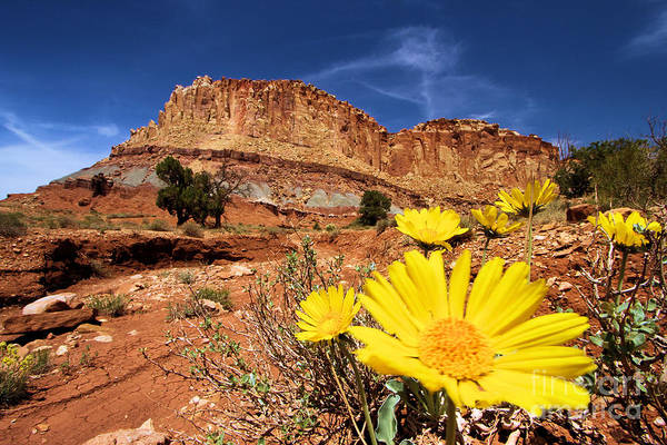 Wall Art - Photograph - Canyon Flowers by Adam Jewell