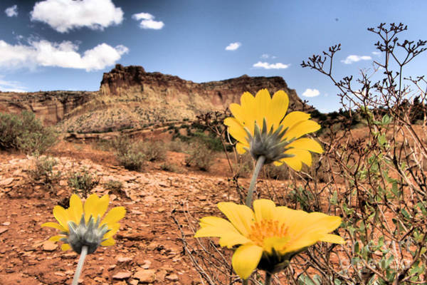 Photograph - Capitol Flowers by Adam Jewell