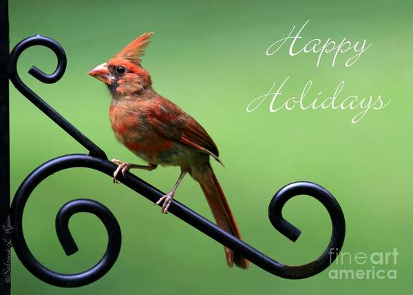 Photograph - Cardinal Holiday Card by Sabrina L Ryan