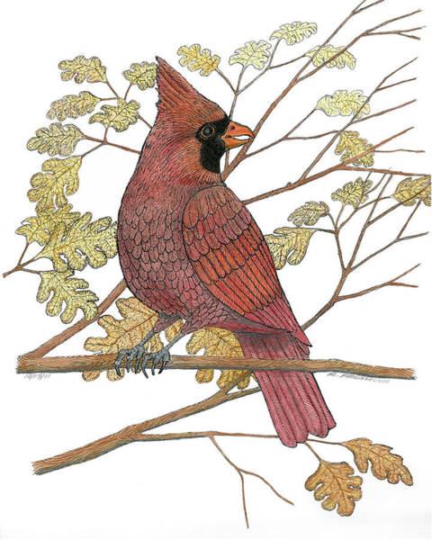 Red Cardinal Drawing - Cardinal by Richard Freshour