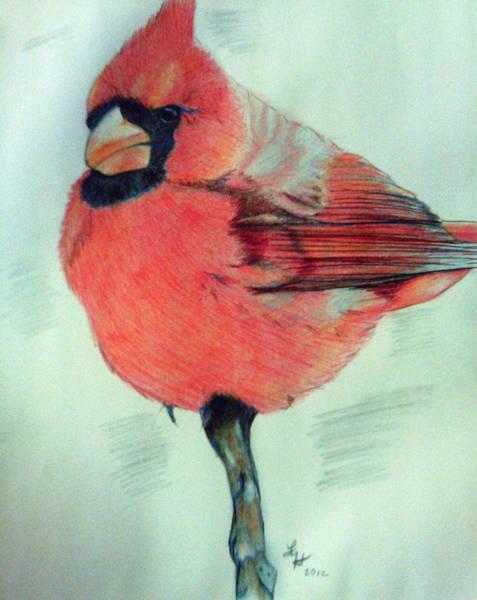 Cardinal Study Art Print