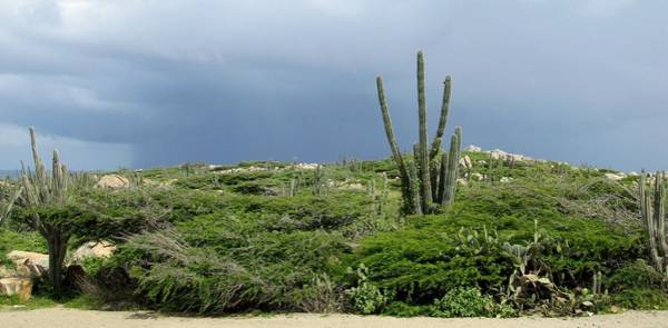 Photograph - Caribbean Desert by Keith Stokes