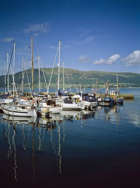 Down The Shore Photograph - Carlingford Yacht Marina, Co Louth by The Irish Image Collection