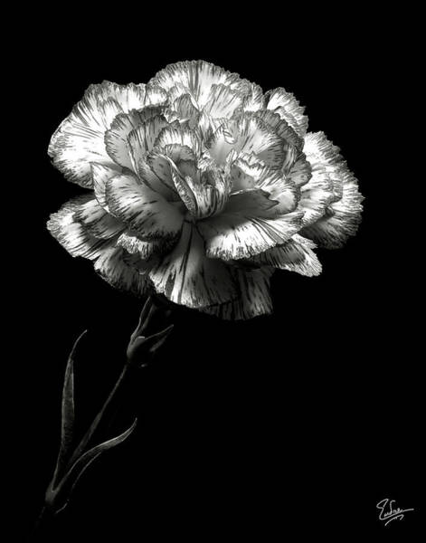 Photograph - Carnation In Black And White by Endre Balogh