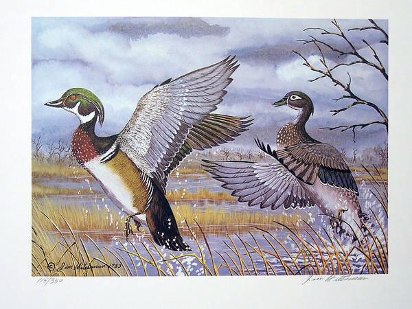 Wall Art - Painting - Carolina Wood Duck by Jim Hitesman