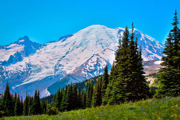 Photograph - Cascade Meadow Near Mt Rainier by David Patterson