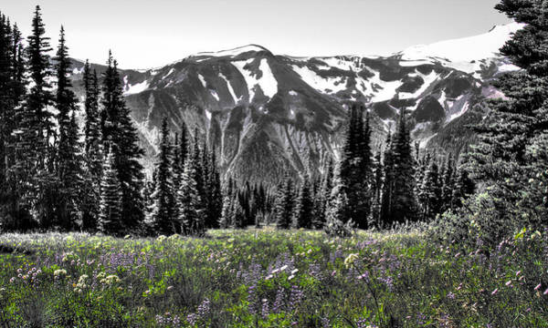 Photograph - Cascade Range Meadow by David Patterson