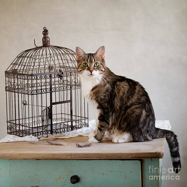 Spots Photograph - Cat And Bird by Nailia Schwarz