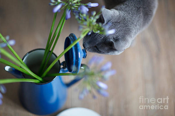 Russia Wall Art - Photograph - Cat And Flowers by Nailia Schwarz