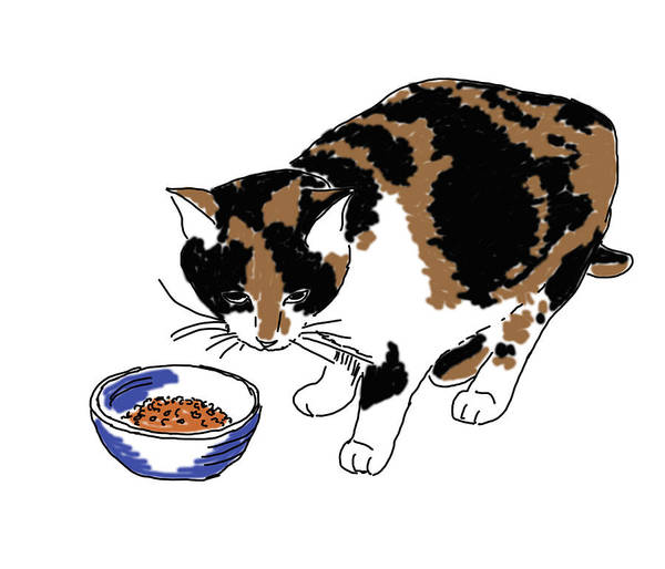 Drawing - Cat And Kibble by Daniel Reed