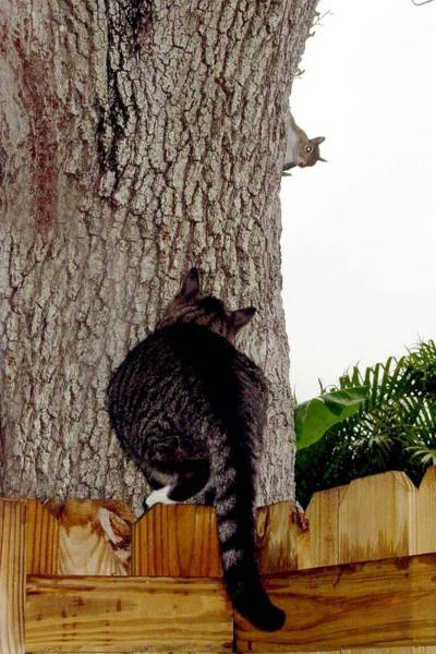 Manx Cat Wall Art - Photograph - Cat And Squirrel Game by Kathleen Horner
