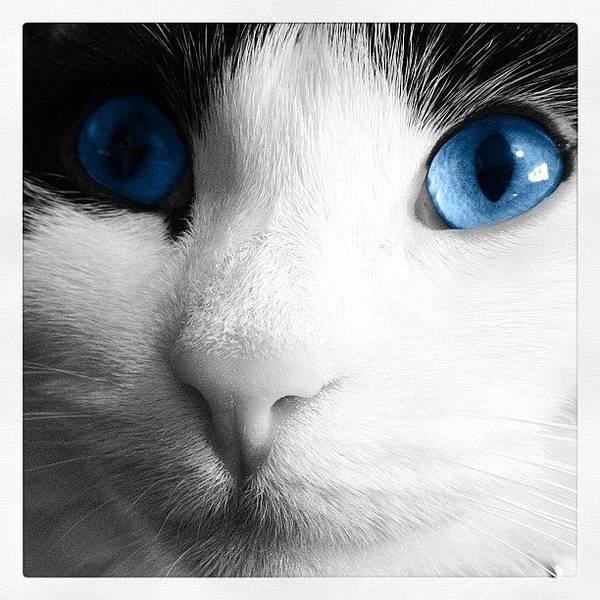 Wall Art - Photograph - Cat Blue Eyes by Rachel Williams