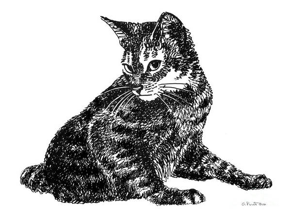 Drawing - Cat Drawings 6 by Gordon Punt