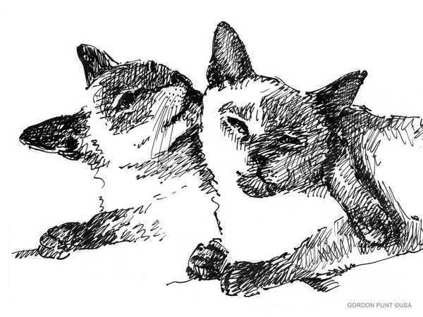 Drawing - Cat-drawings-siamese-2 by Gordon Punt