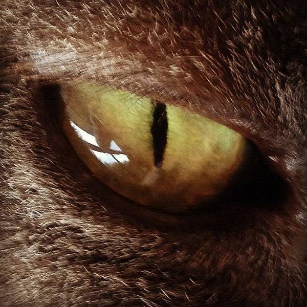 Popular Wall Art - Photograph - Cat Eye by Cameron Bentley