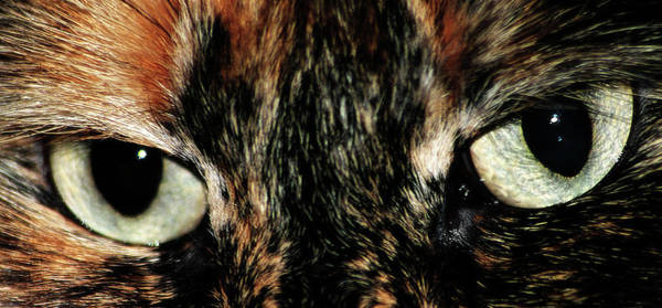 Photograph - Cat Eyes by Scott Hovind