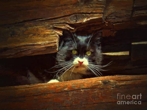 Mixed Media - Cat Hiding by Jerry L Barrett