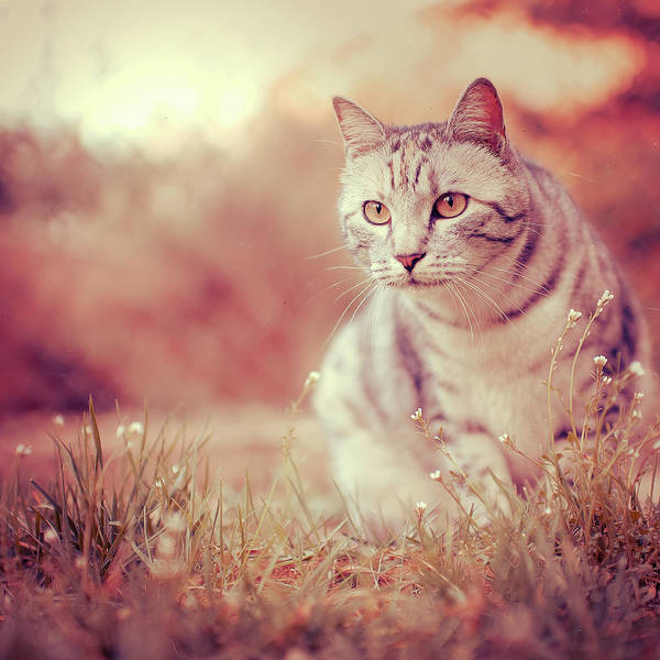 Domestic Cat Wall Art - Photograph - Cat In Grass by Alberto Cassani