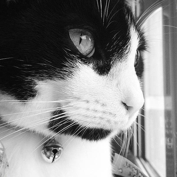 Wall Art - Photograph - Cat Looking Out Window by Rachel Williams