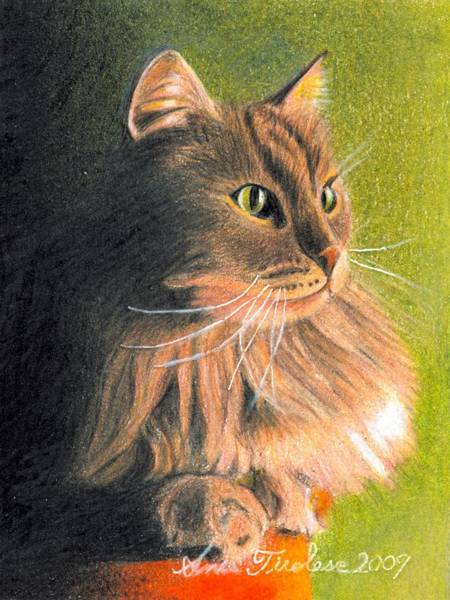 Drawing - Cat Miniature by Ana Tirolese