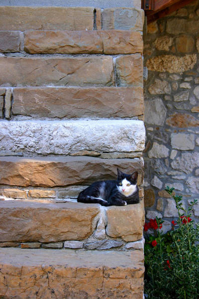Photograph - Cat On Stairs by Emanuel Tanjala
