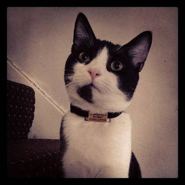 Wall Art - Photograph - Cat Portrait  by Rachel Williams