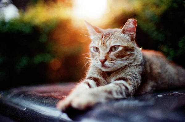 Photograph - Cat Resting by Jdnyim