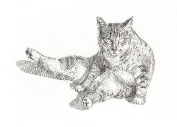 White Tiger Drawing - Cat Sitting by Kazumi Whitemoon