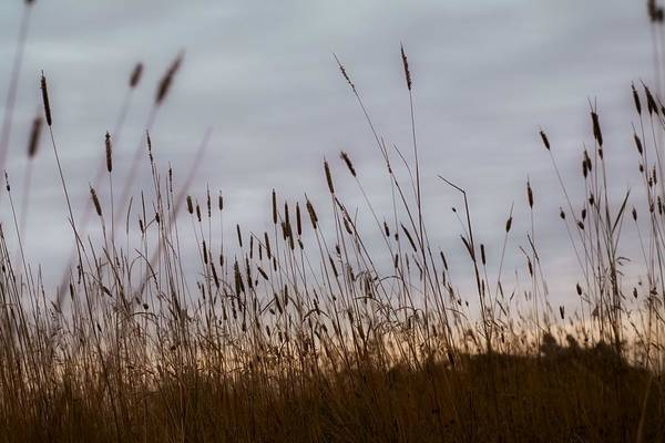 Bulrush Wall Art - Photograph - Cat Tails by Chris Knorr
