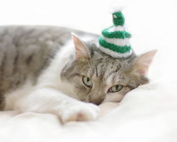 Horizontal Stripes Photograph - Cat Wearing White Striped Knitted Hat by Ineke Kamps