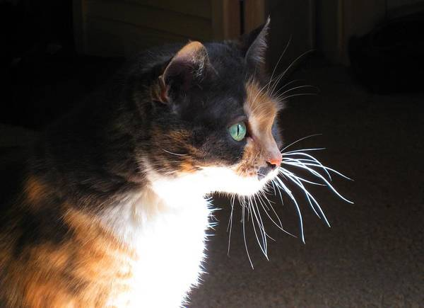 Wall Art - Photograph - Cat Whiskers by Sue Halstenberg