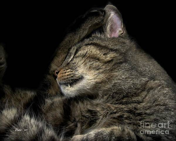 Photograph - Catching Zzzzs by Dale   Ford