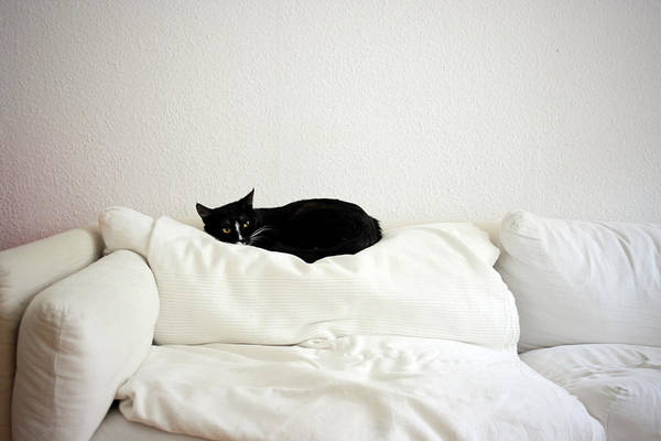 Cushion Photograph - Catheaven by Licensed Material