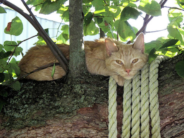 Wall Art - Photograph - Catnap Time by Thomas Woolworth
