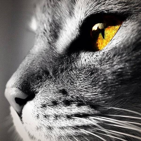 Blackandwhite Wall Art - Photograph - Cat's Eye by Mark B