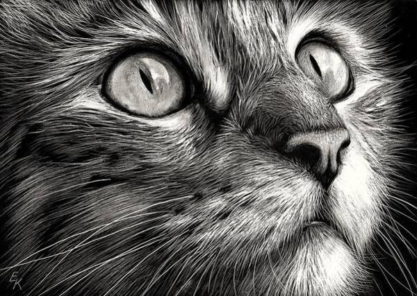 Cat's Face Art Print