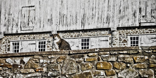 Photograph - Cat's On The Wall by Trish Tritz