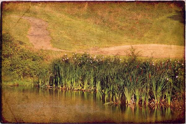 Photograph - Cattails by Angie Tirado