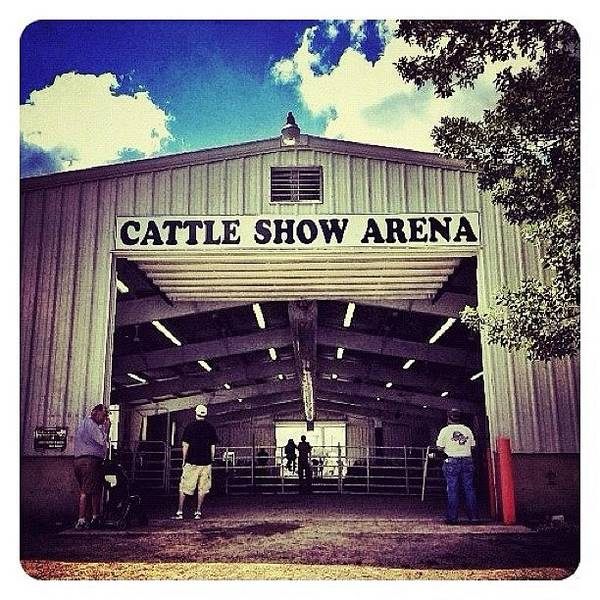 Ohio Wall Art - Photograph - Cattle Show Arena by Natasha Marco