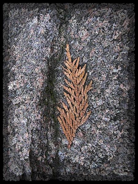 Granite Digital Art - Cedar On Granite by Tim Allen
