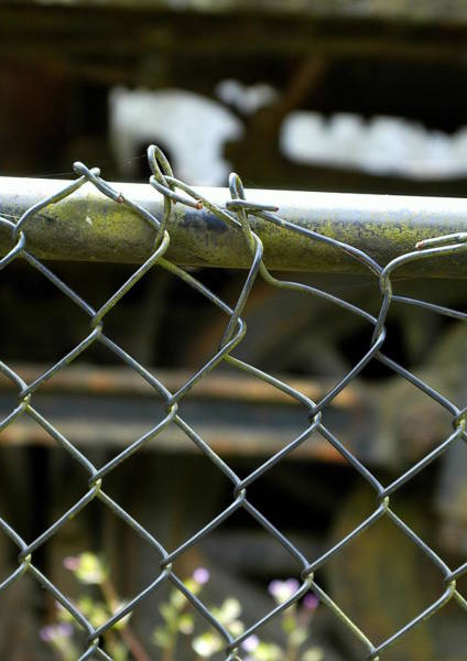 Chain Link Photograph - Chain Link Fence by Lori Seaman