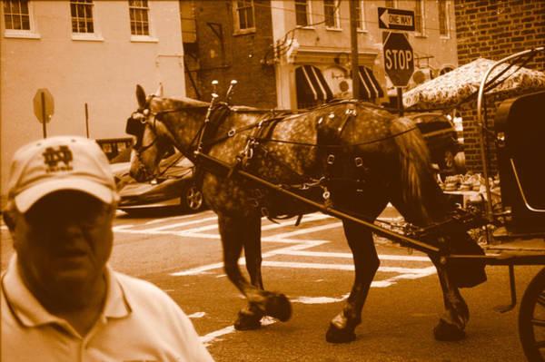 Photograph - Charleston Draft Horse by Emery Graham