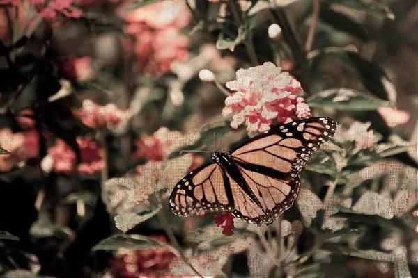Photograph - Chasing Butterflies by Trish Tritz