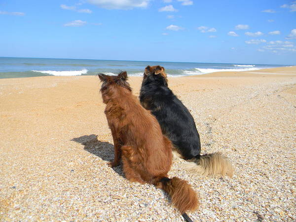 Flagler Photograph - Checking Out The Surf by Christy Usilton