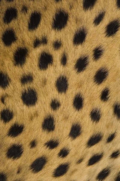 Photograph - Cheetah Spots Namibia by Suzi Eszterhas