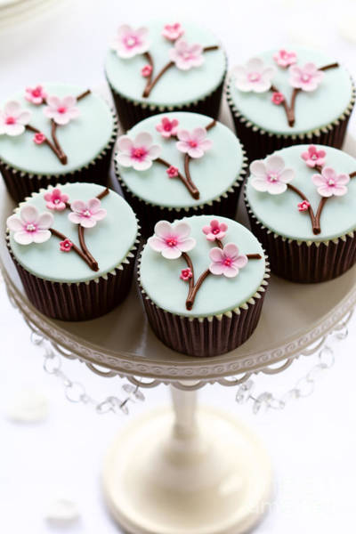 Wall Art - Photograph - Cherry Blossom Cupcakes by Ruth Black