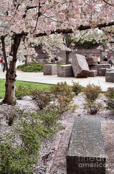 Photograph - Cherry Blossoms At Stones At The Fdr Memorial In Washington Dc by William Kuta