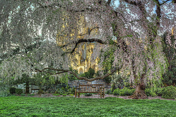 Photograph - Cherry Blossoms At The Washington National Cathedral by Metro DC Photography
